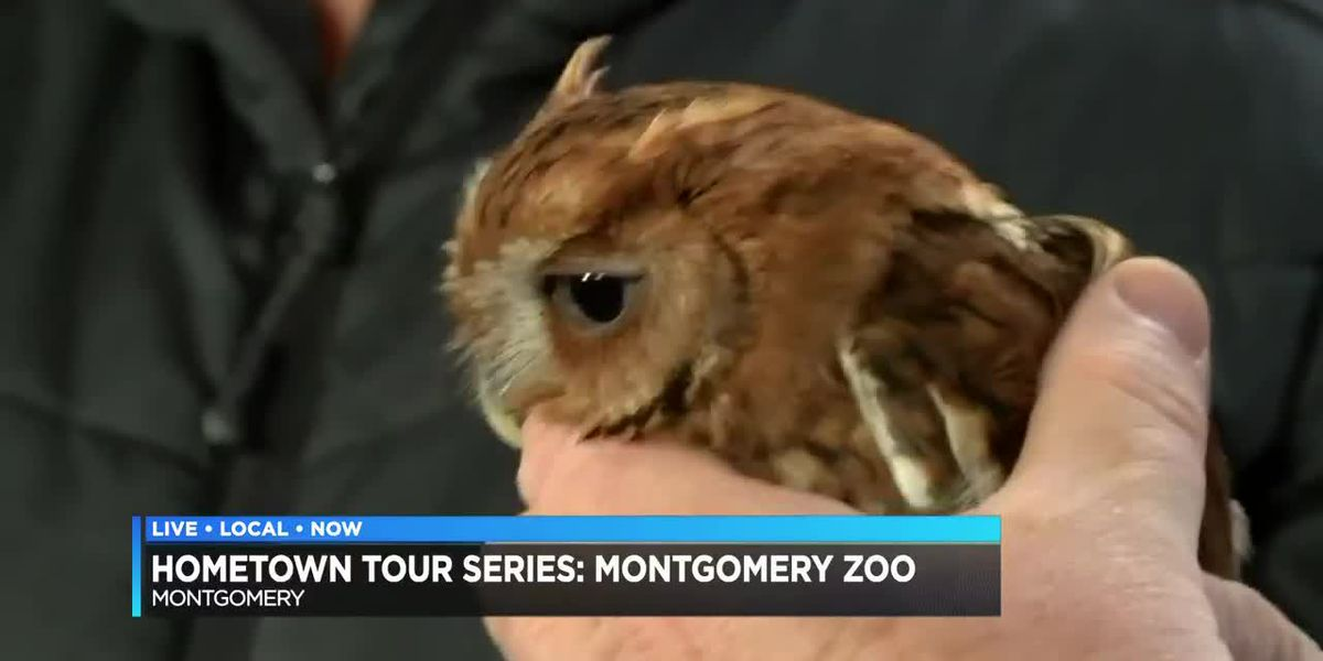 Hometown Tour Series: Montgomery Zoo