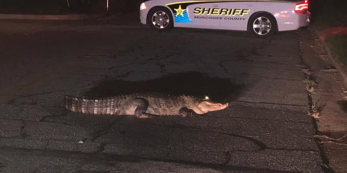 Nearly 9-foot gator captured in downtown Columbus