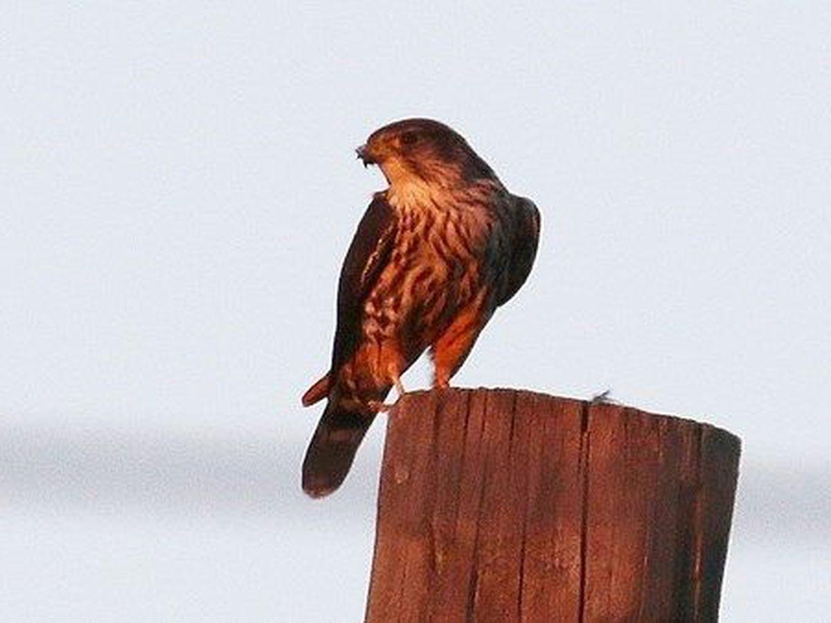 Online birding tool 'eBird' helps birders help science