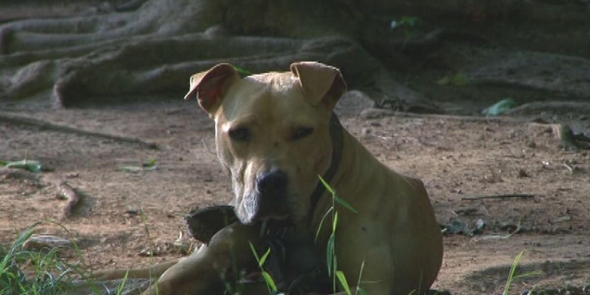New Huntsville law forbids dogs from being chained up outside