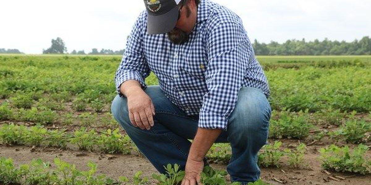 Governor, agriculture commissioner seek disaster declaration from USDA