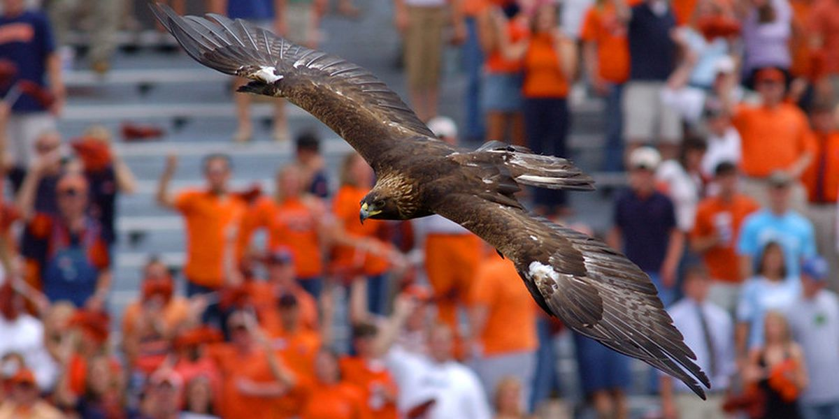 Auburn officially retires Nova, its 20-year-old golden eagle