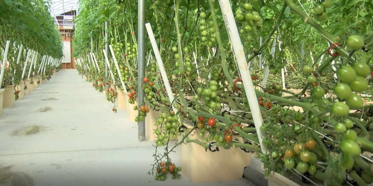 Small farmers face obstacle delivering fresh produce to schools