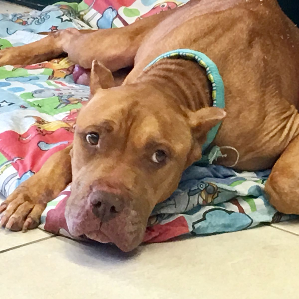Dogs dropped off at Montgomery shelter with critical injuries recovering