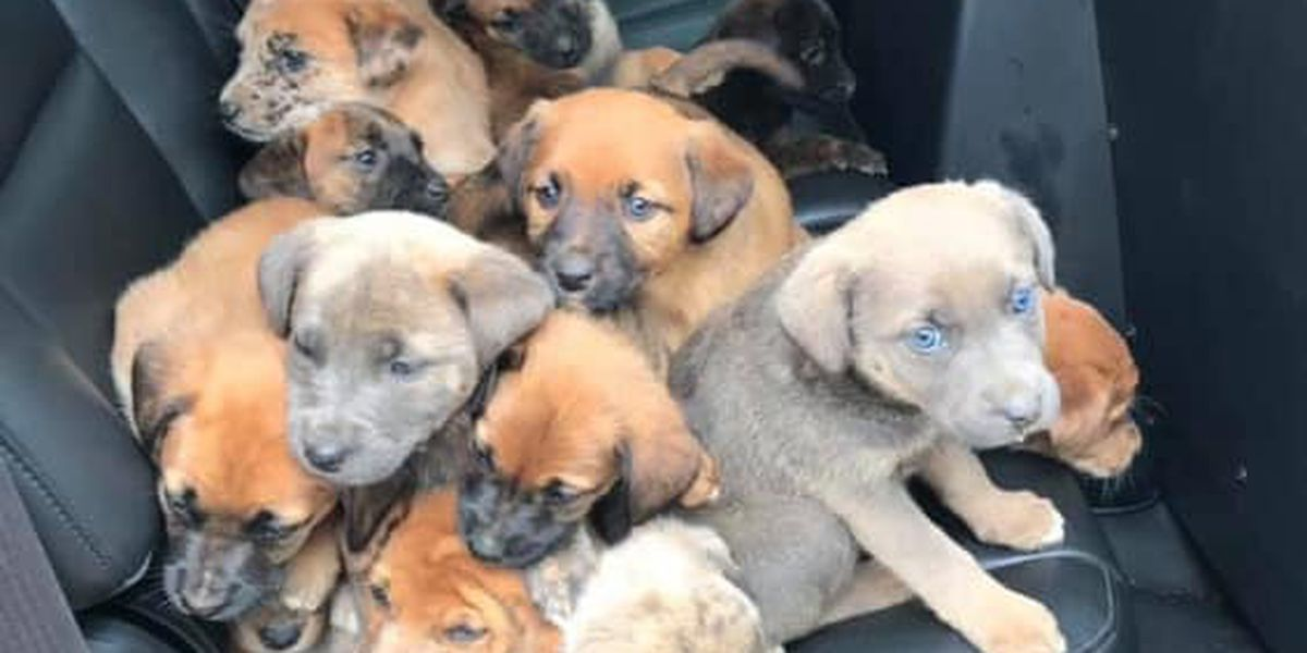 Puppies found abandoned on Dale County road