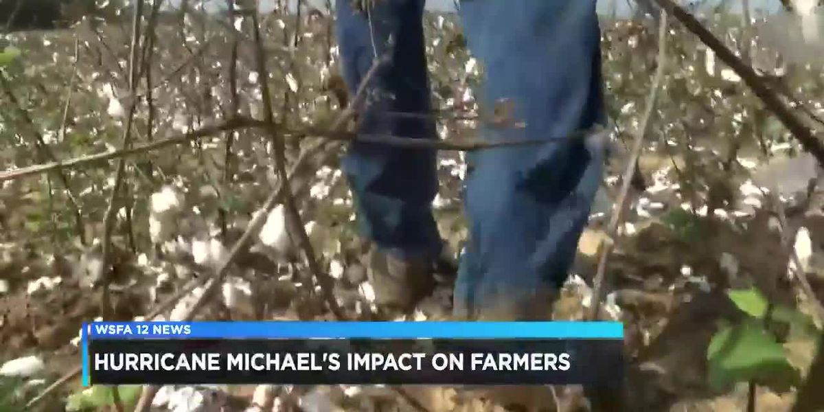 AL farmers experience more than $200 million in damages after Hurricane Michael