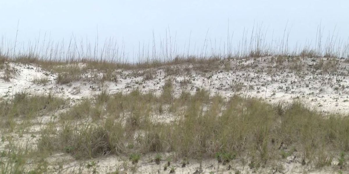 Some Gulf State Park public access points reopen to visitors