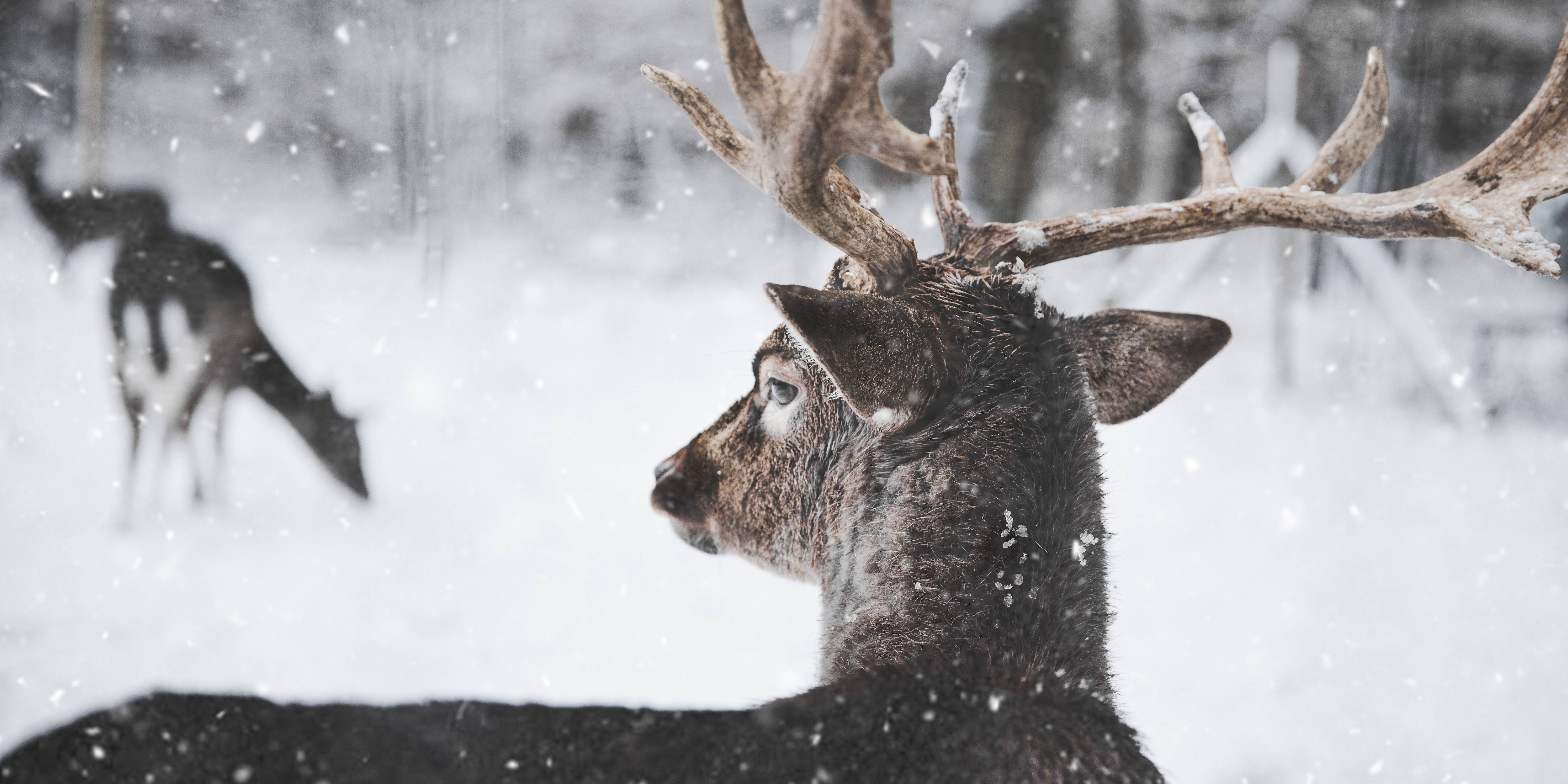 Hunter with a heart saves deer stranded on icy lake