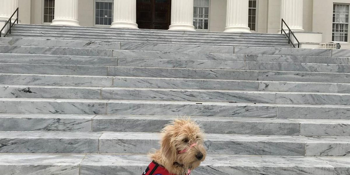 Bailey tours Capitol Hill, learns about the election process