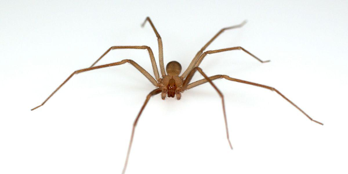 Venomous spiders prompt temporary Michigan library shutdown
