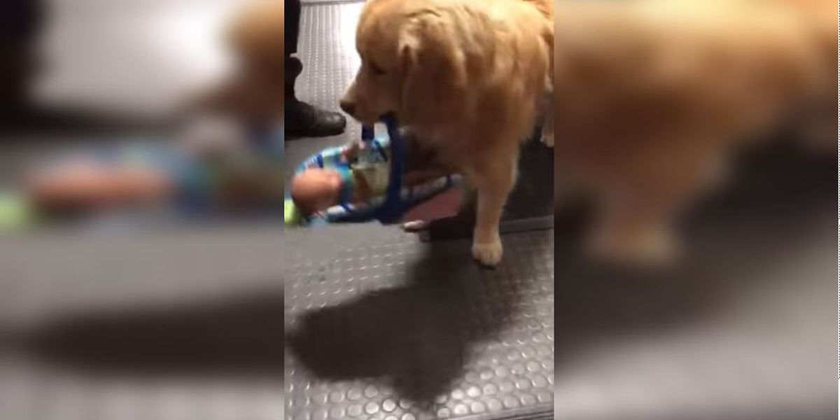 WATCH: Police catch department therapy dog 'stealing' donated Christmas toys