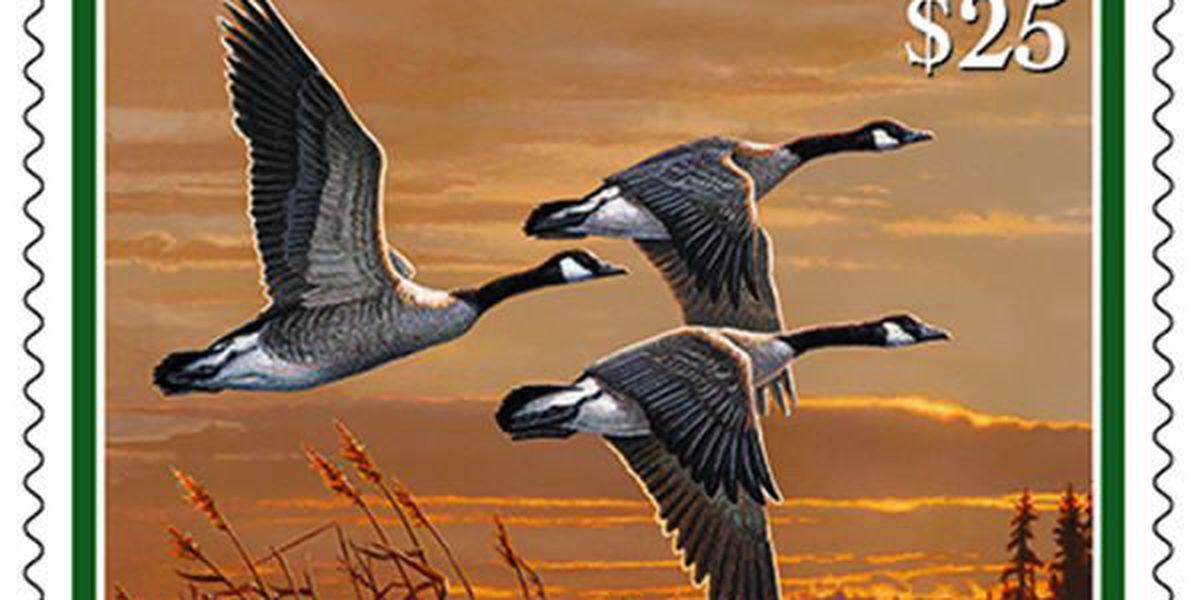 Ken Hare's Natural Alabama: Birders should buy federal Duck Stamps