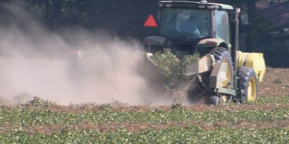 Alabama farmers keep eye on Hurricane Delta