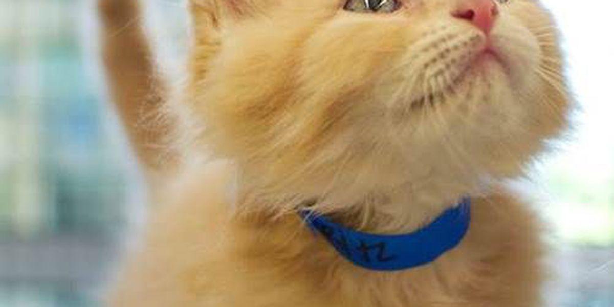 Purr-fect half-price kitten adoptions at Montgomery Humane Society
